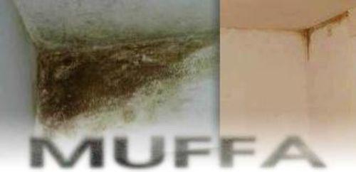 Muffa, umidità e condensa - Tutto il mondo del cartongesso